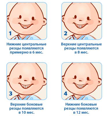 появление первых зубов.