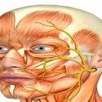 Анатомия тройничного нерва у человека