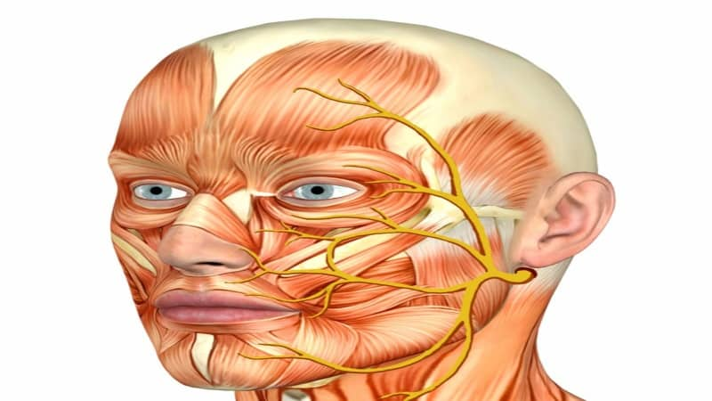 где находится троичный нерв