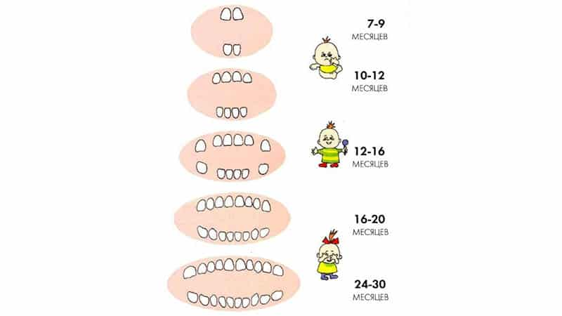 Как растут зубы у детей схема