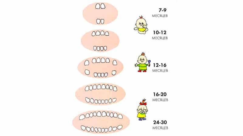 Появление первых зубов у младенцев