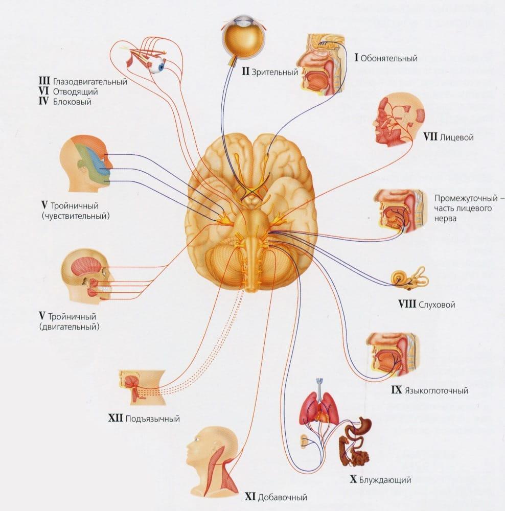 воспаление тройничного нерва симптомы и лечения фото