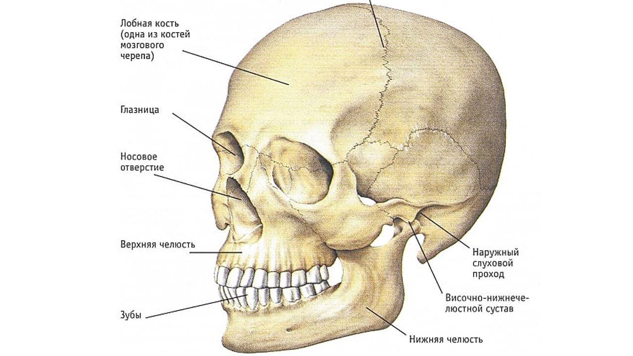 почему ломит ноет болит челюсть справа слева при открывании рта причины что делат