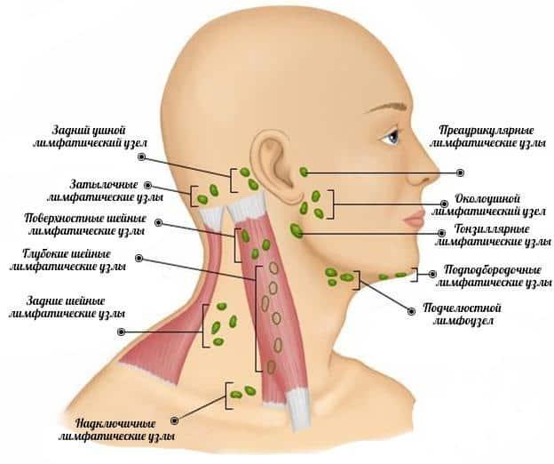 что делать если воспалился увеличился лимфоузел над под челюстью причины как лечить