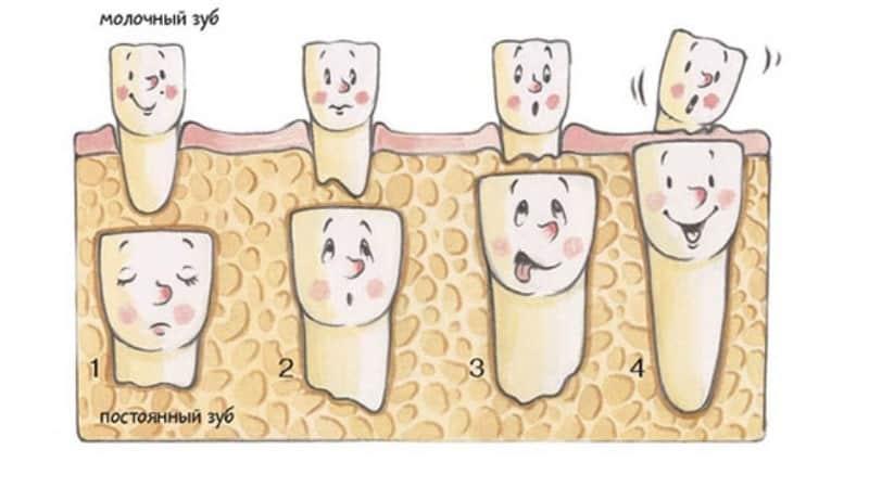 сроки прорезывания постоянных зубов у детей симптомы