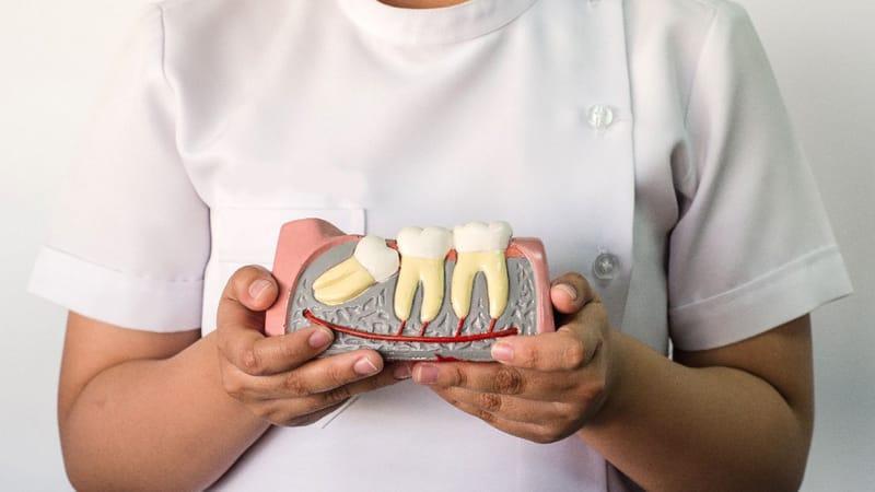 Сколько раз у человека растут зубы