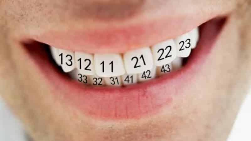 нумерация зубов у человека схема