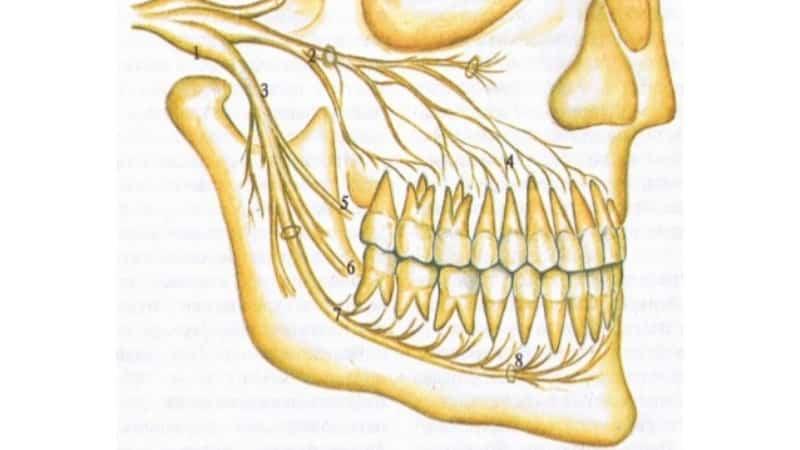почему болят все зубы сразу одновременно