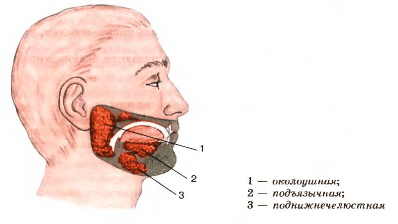 запах изо рта при лор заболеваниях